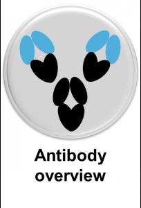 Antibodyoverview