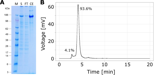 IgE_HPLC_Gel_combined