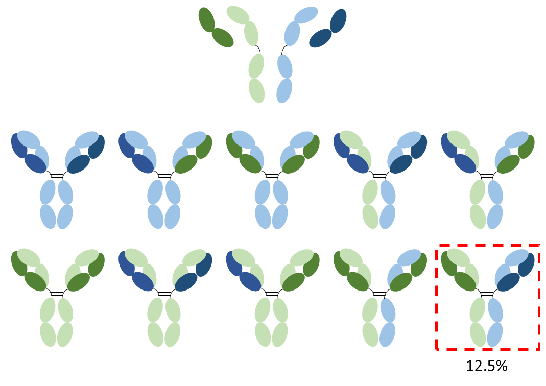Figure 1. The chain association problem. Representation of the antibody combinations that can be produced by a quadroma cell line assuming random chain association. In total 16 formats are possible, of which six are identical. Six tetramers, including the desired bispecific antibody, occur twice (each with a yield of 12.5%) and four tetramers occur once (each with a yield of 6.25%).