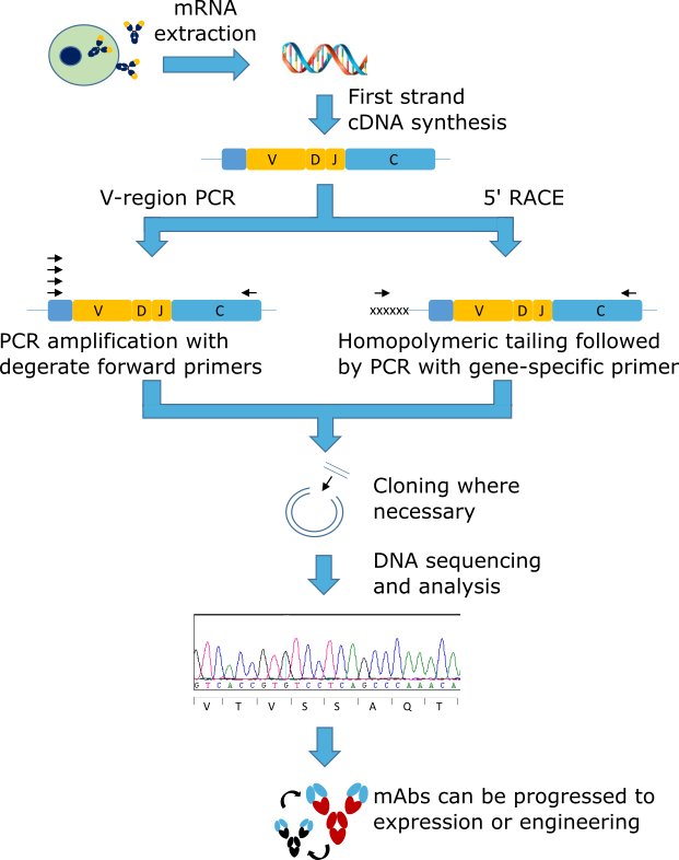 new_sequencing_diagram